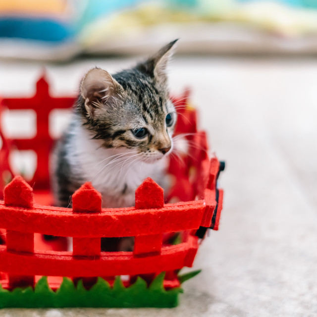 """""""Cute Baby Cat In Small Basket At Home"""" stock image"""