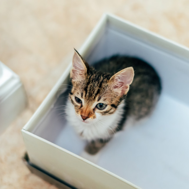 """""""Cute Baby Cat In Small Box At Home"""" stock image"""