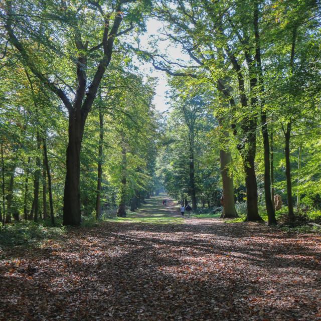"""Autumn Landscape"" stock image"