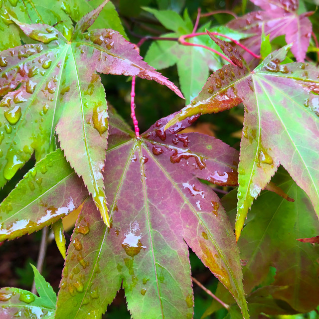 """Vibrant Autumn Leaves"" stock image"