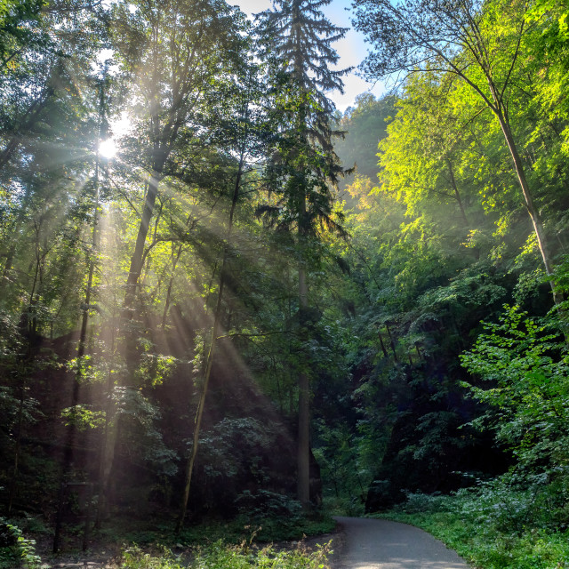 """""""Road to Punkva caves near Brno in Czech Republic"""" stock image"""