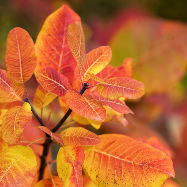 """""""The beauty of autumn colors."""" stock image"""
