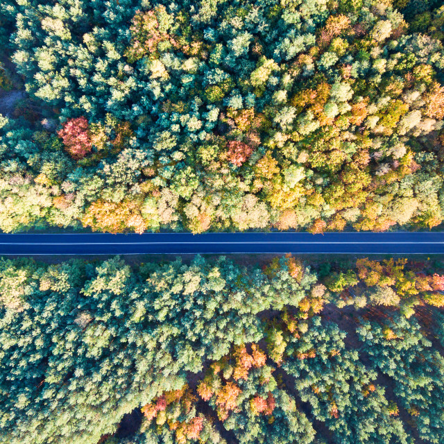 """Road through colorful autumn forest"" stock image"