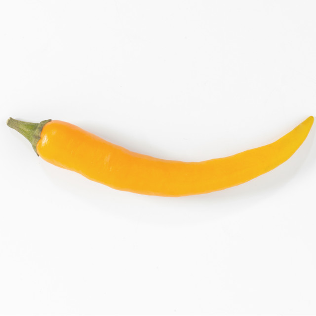 """a small yellow chilli on a white background"" stock image"