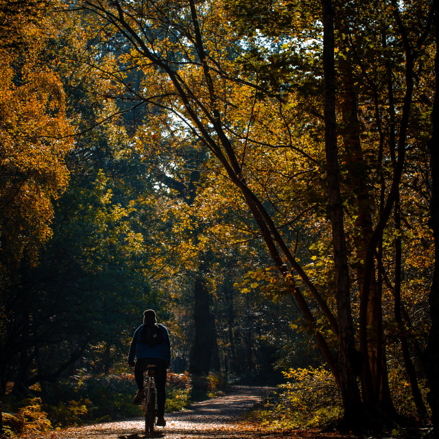 """""""Cyclist in Woods"""" stock image"""