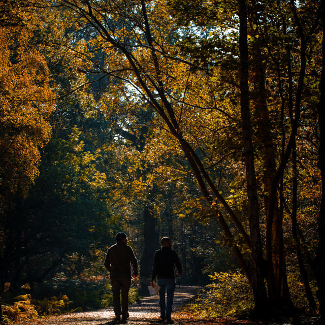 """""""Two Men Walking in the Woods"""" stock image"""
