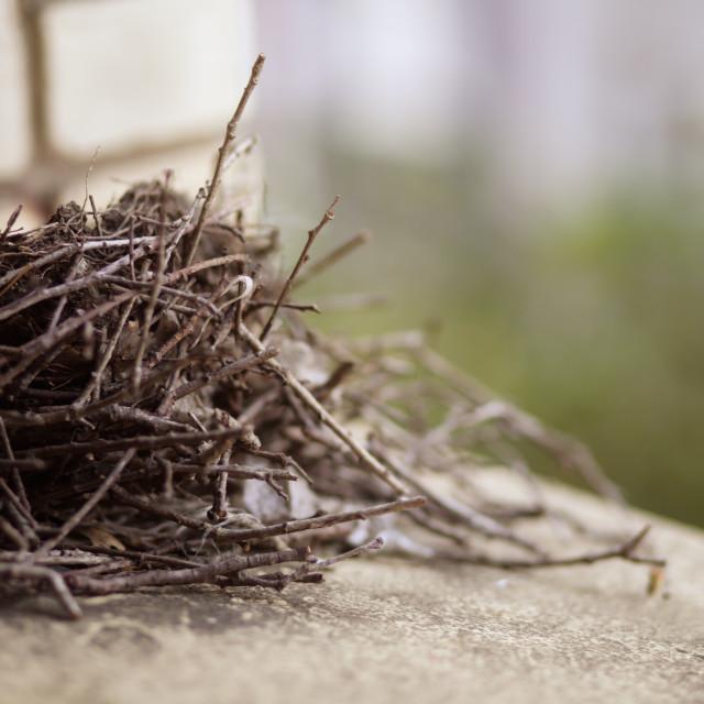 """""""Abandoned Bird's Nest on Window Sill Ledge"""" stock image"""