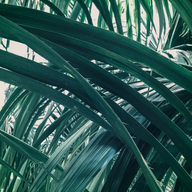 """""""Tropical Leaves Intersecting Close Up"""" stock image"""