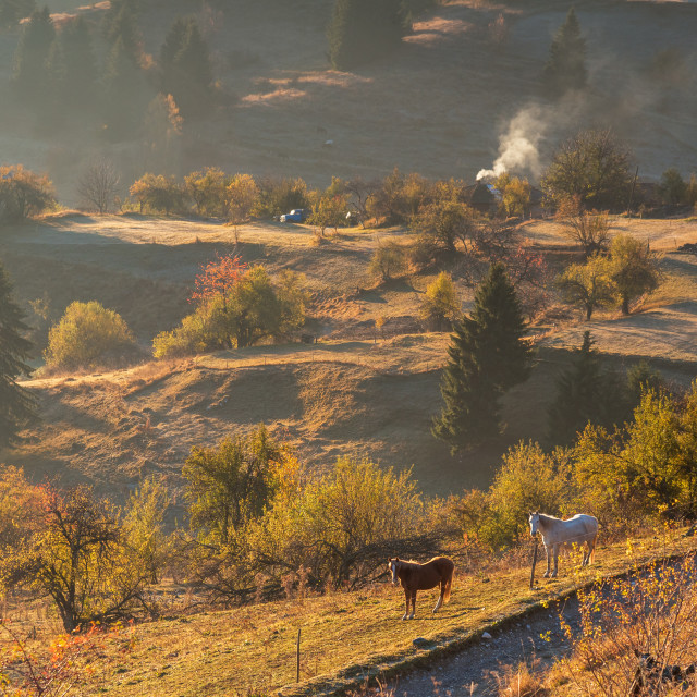 """""""Horses graze near the mountain in the pasture in the autumn."""" stock image"""