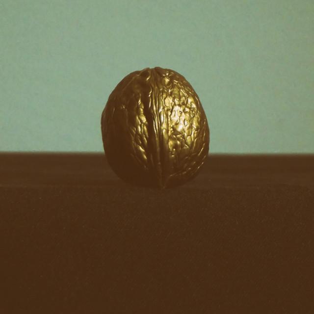 """Walnut"" stock image"