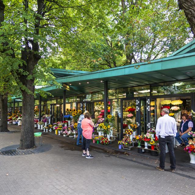"""24 hours open Saktas Flower MarketRiga, Latvia, Baltic States, Europe"" stock image"