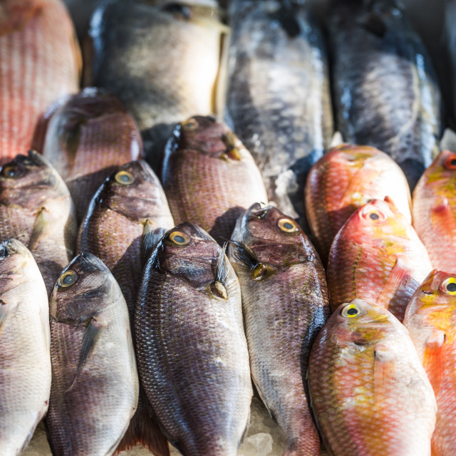 """""""Fish for sale at a food market in Fort Kochi (Cochin), Kerala, India"""" stock image"""