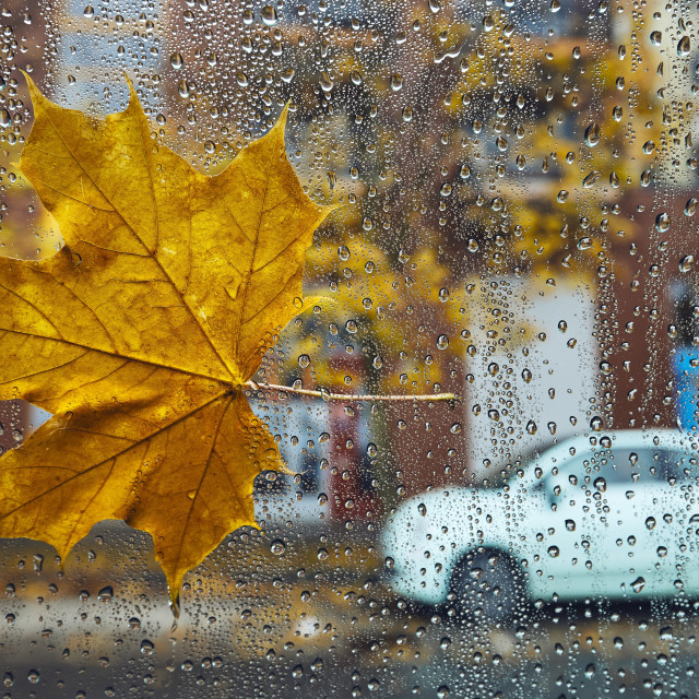 """""""Autumn in the city"""" stock image"""