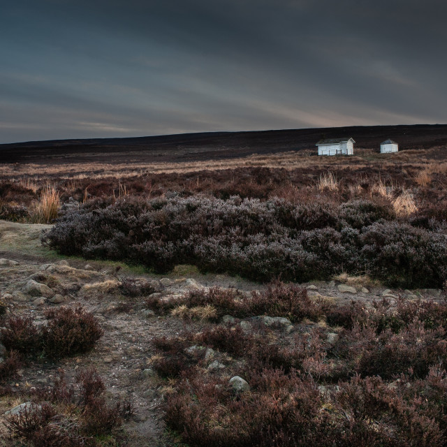 """""""First light on the moor"""" stock image"""