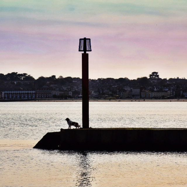 """""""Dog on the pier"""" stock image"""