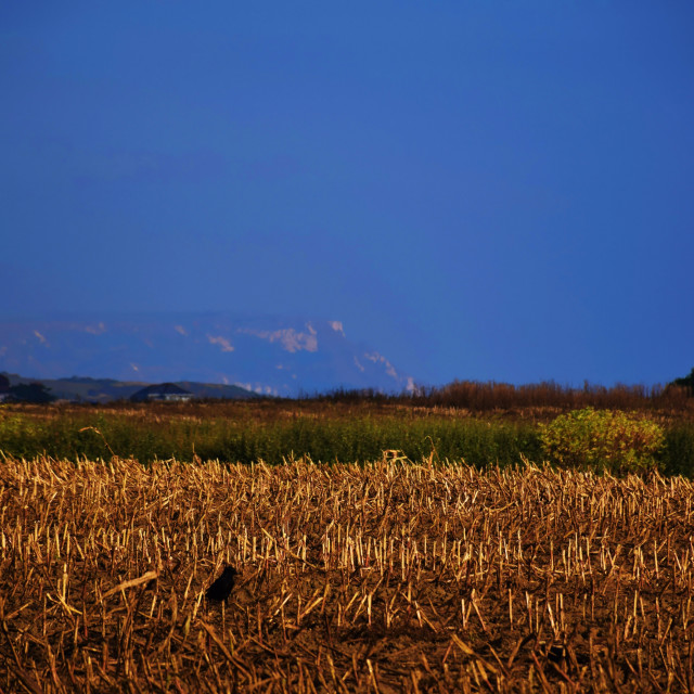 """Dusk in the fields."" stock image"
