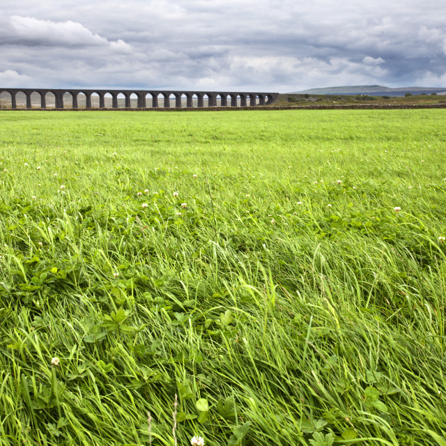 """Ribblehead Viaduct across a Meadow"" stock image"