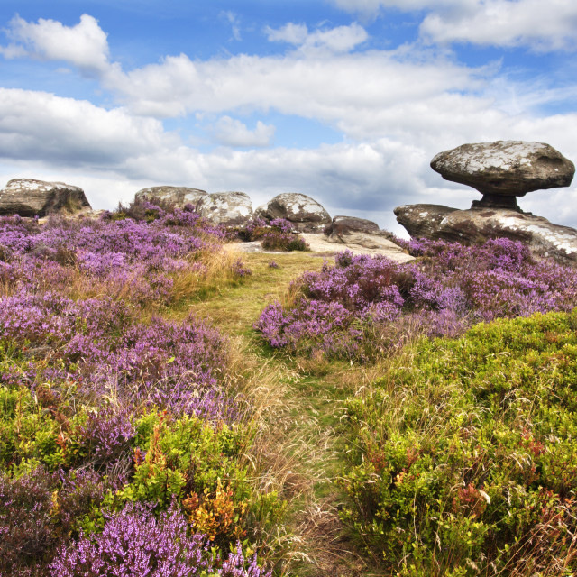 """Mushroom Rock and Heather in Bloom on Brimham Moor"" stock image"