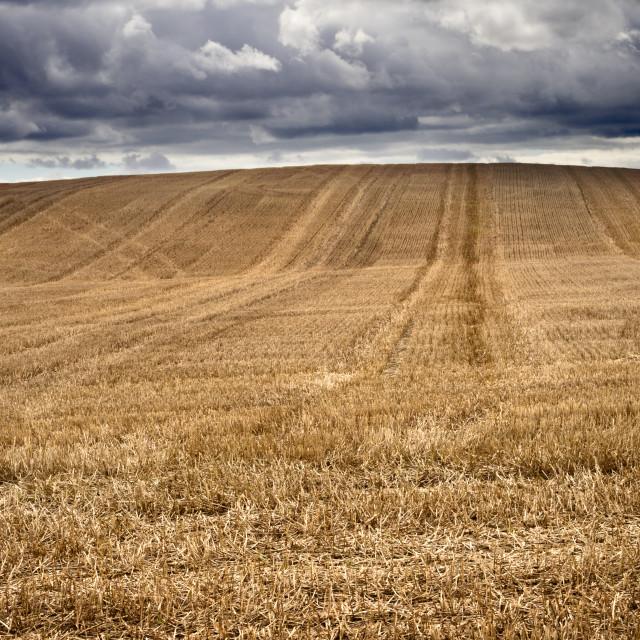 """Stubble in a Field under a Dark Sky"" stock image"
