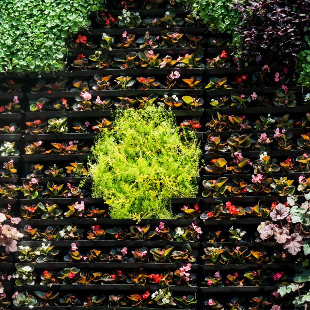 """""""Wallflowers"""" stock image"""