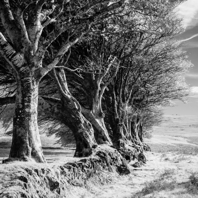 """Dartmoor Hedge"" stock image"