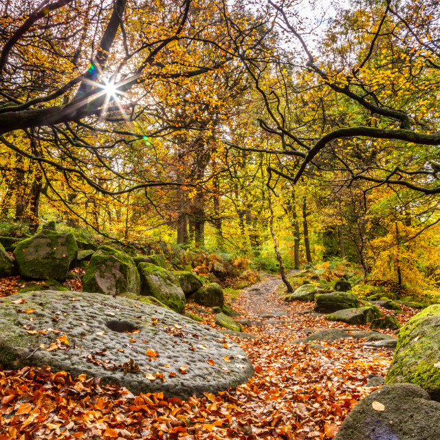 """""""A sunburst shines through the rapidly thinning canopy as a thick autumnal carpet attempts to bury the ancient millstone embedded in the path. Padley Gorge, Derbyshire in the Peak District, UK."""" stock image"""