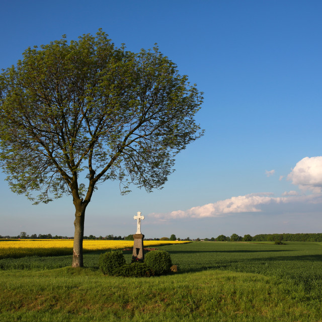 """Wayside cross in a field under a tree in the countryside."" stock image"