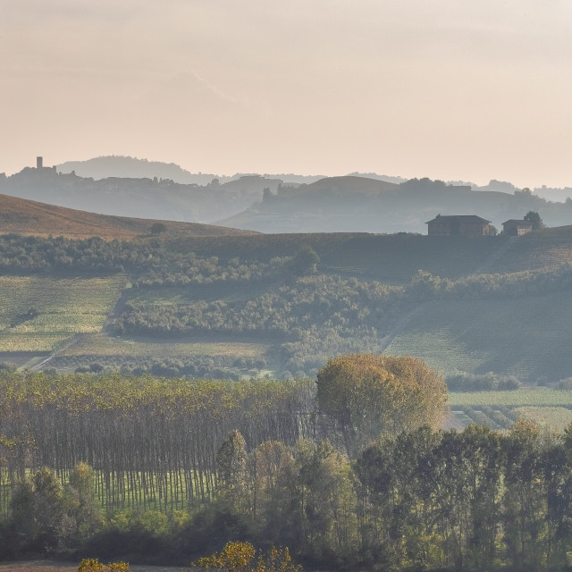 """""""Sunset over Langhe vineyards. Color image"""" stock image"""