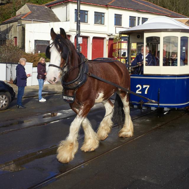 """""""Tram horse William pulling tram number 27"""" stock image"""