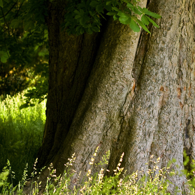 """""""Tree and Grass"""" stock image"""
