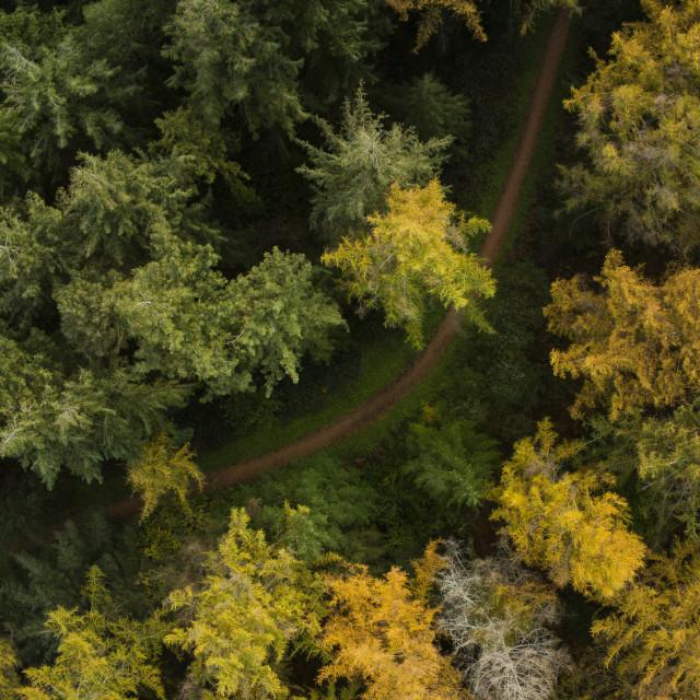 """""""Woodland path"""" stock image"""