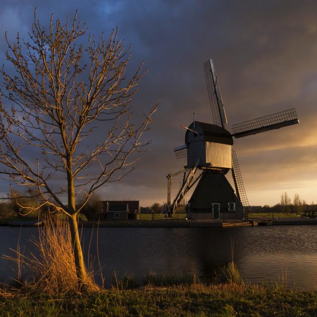 """""""Evening light at Kinderdijk"""" stock image"""