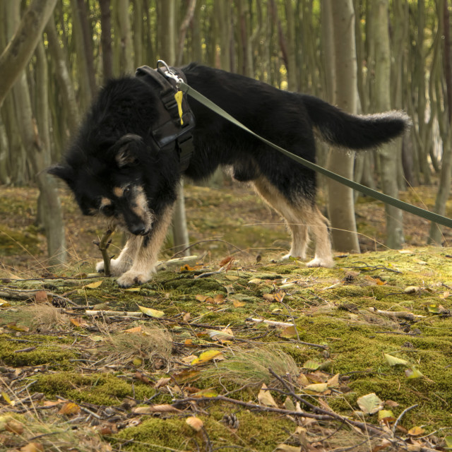 """""""Dog in the Wood"""" stock image"""
