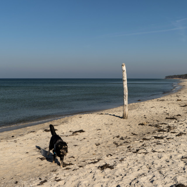 """""""Dog on a Beach in Germany"""" stock image"""