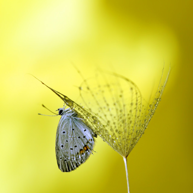 """The garden butterfly is resting in the beautiful scenery of autumn colors"" stock image"