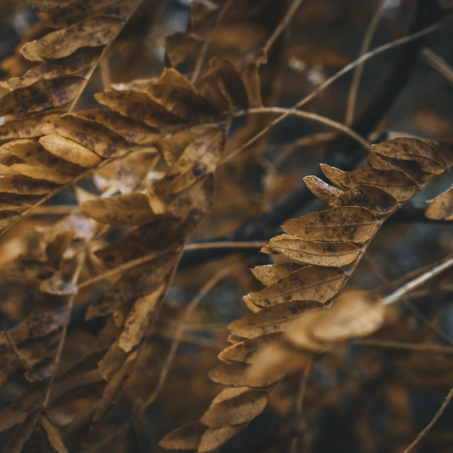 """""""Leaves in the Wind"""" stock image"""