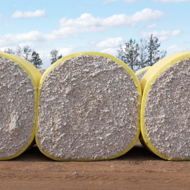"""Cotton Bales"" stock image"