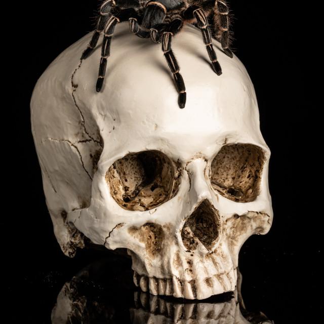 """Spider on skull"" stock image"