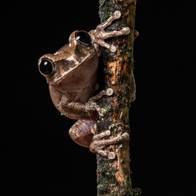 """""""Frog on branch"""" stock image"""