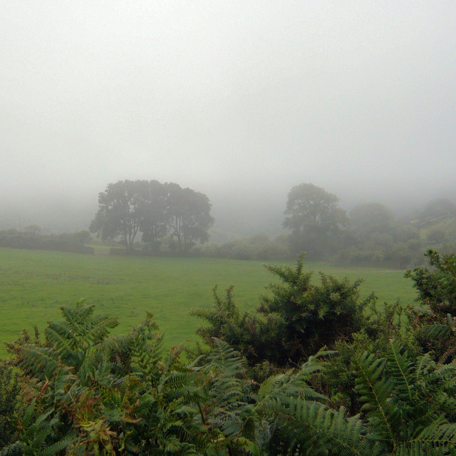 """A misty day, Dartmoor"" stock image"