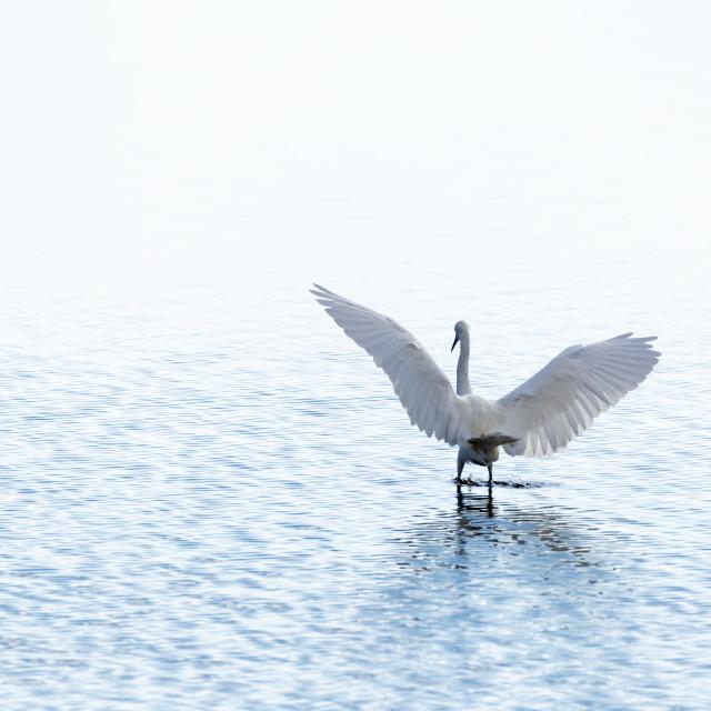 """Angel Wings"" stock image"