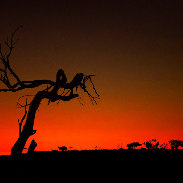 """Dawn: Gabyon Station, Western Australia"" stock image"