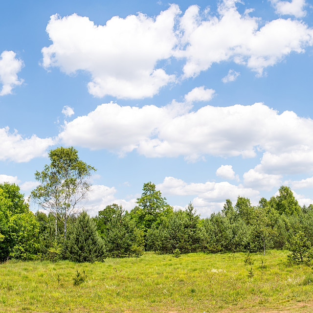 """""""View on the forest in sunny day (Poland)"""" stock image"""