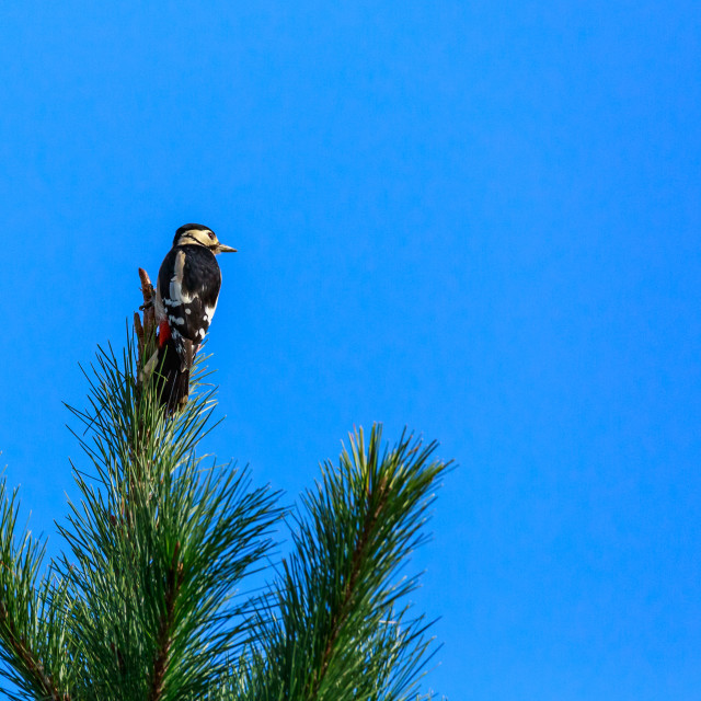 """""""Top of the Tree"""" stock image"""