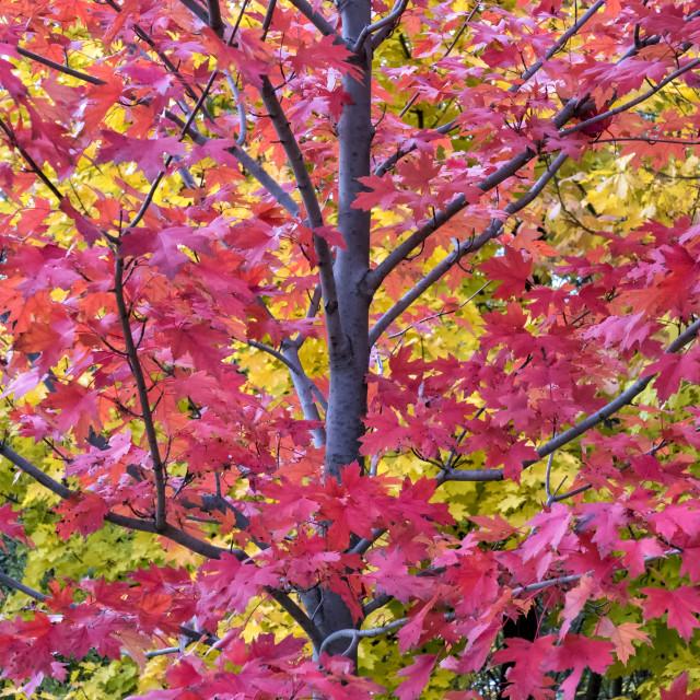"""""""Fall Season Melody: Colour Harmony"""" stock image"""