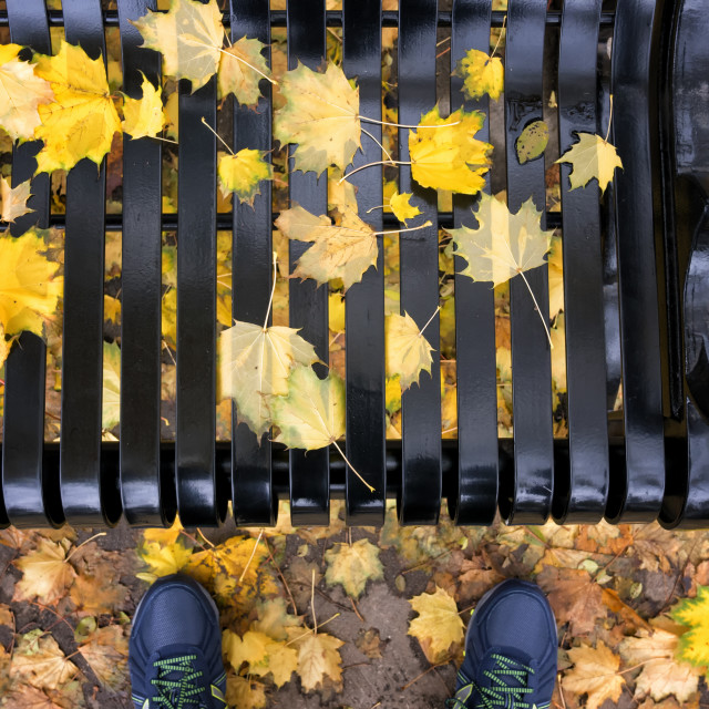 """""""Fall Colour Symphony: Footprint in Ontario - Canada"""" stock image"""
