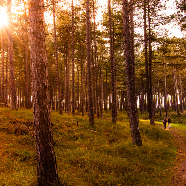 """Forest sunset"" stock image"