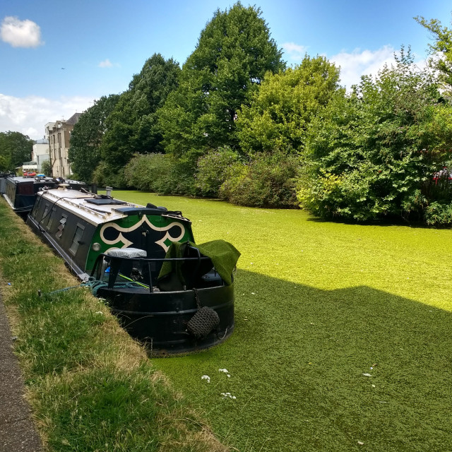 """""""Green narrowboat on a green canal"""" stock image"""