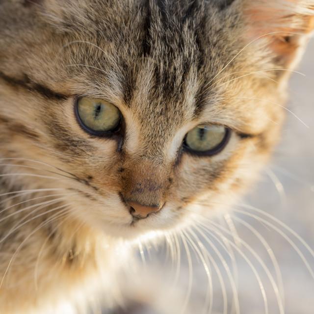 """""""Cute stray kitten"""" stock image"""