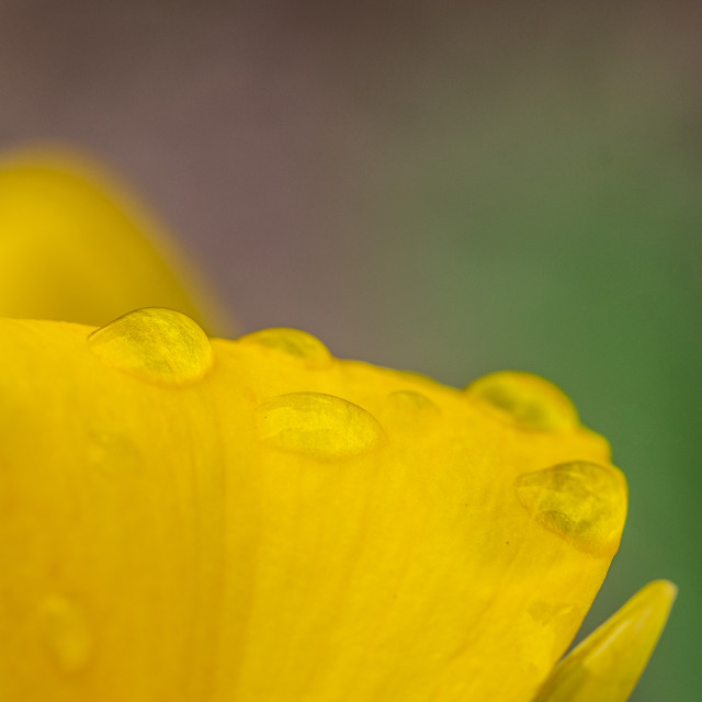 """Drops Of Sunshine"" stock image"
